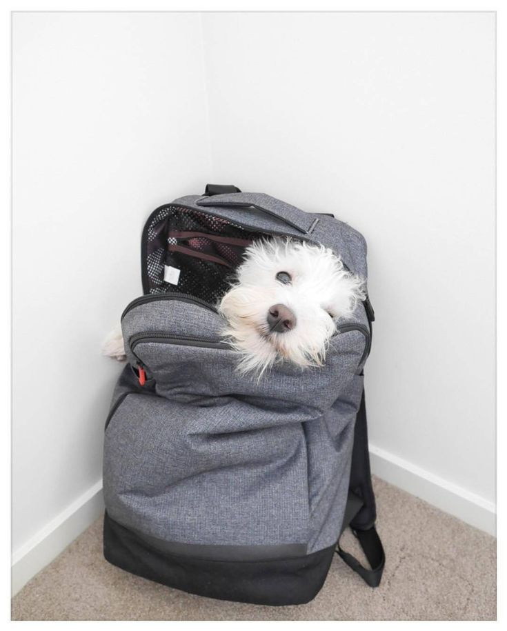 Hurry up! BIG weekend SALE ends in a few hours! GET 25% OFF with code on our website! TAP the link in my @westiemoments bio to reveal SALE CODE! . made in USA International shipping . Photk by: @our.westie.ralphy . #westiemoments