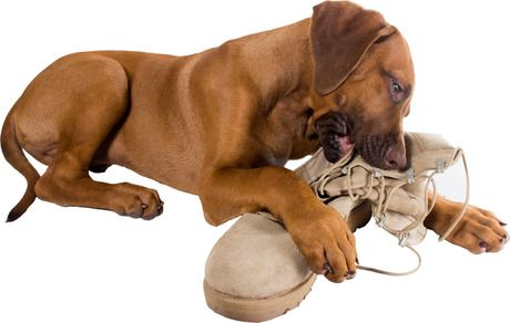 How to stop dogs from destructive chewing - Dogtime. - KEEP A STUFFED KONG IN THE FREEZER