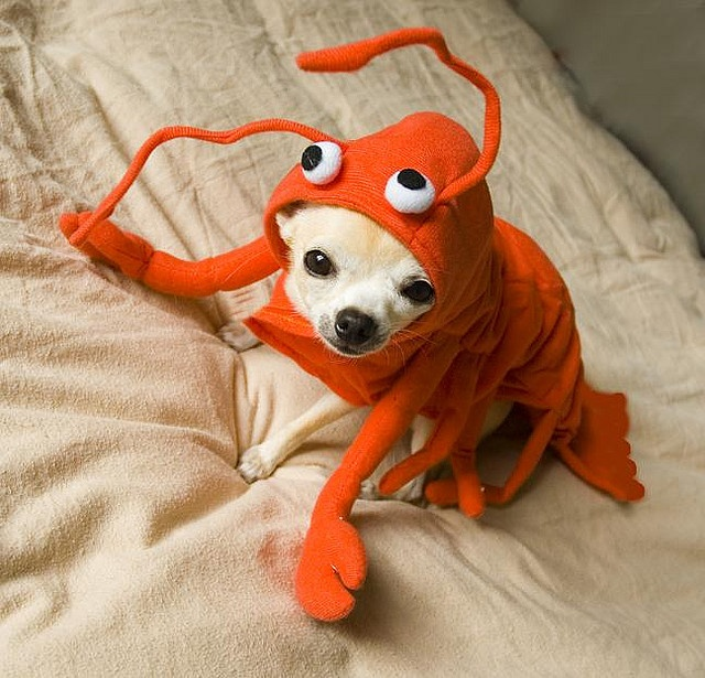 Dogs in costumes = always funny
