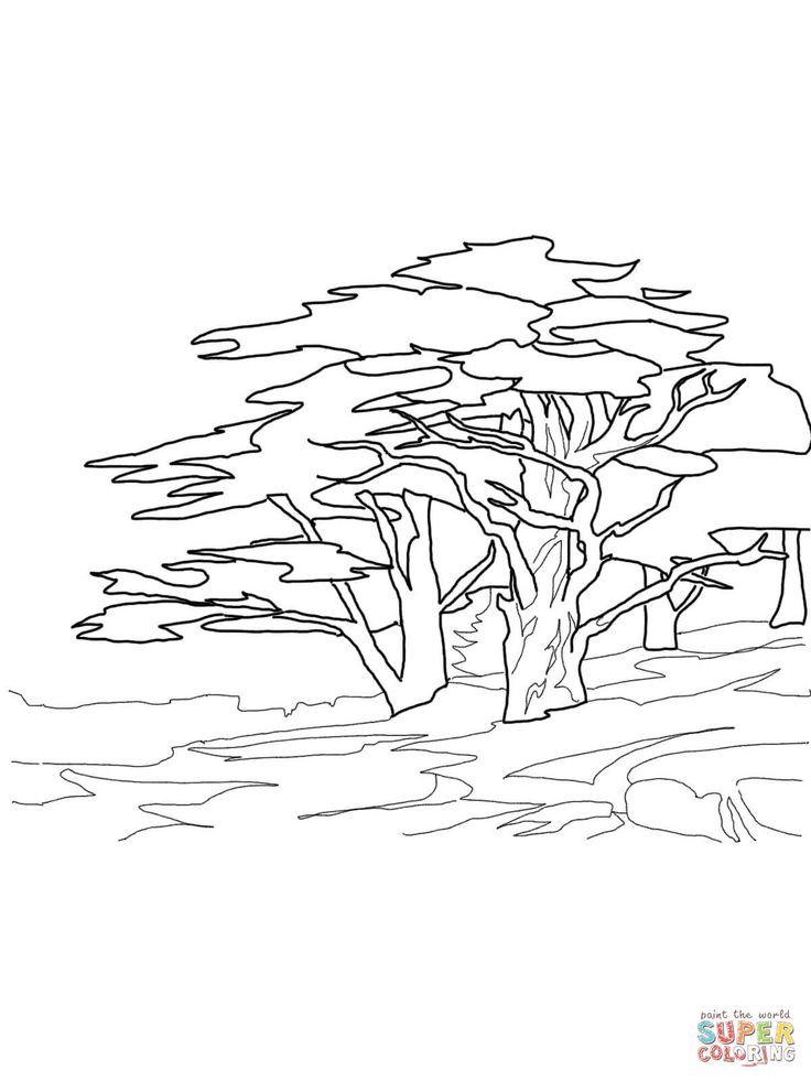 affenbrotbaum ausmalbilder affenbrotbaum ausmalbilder