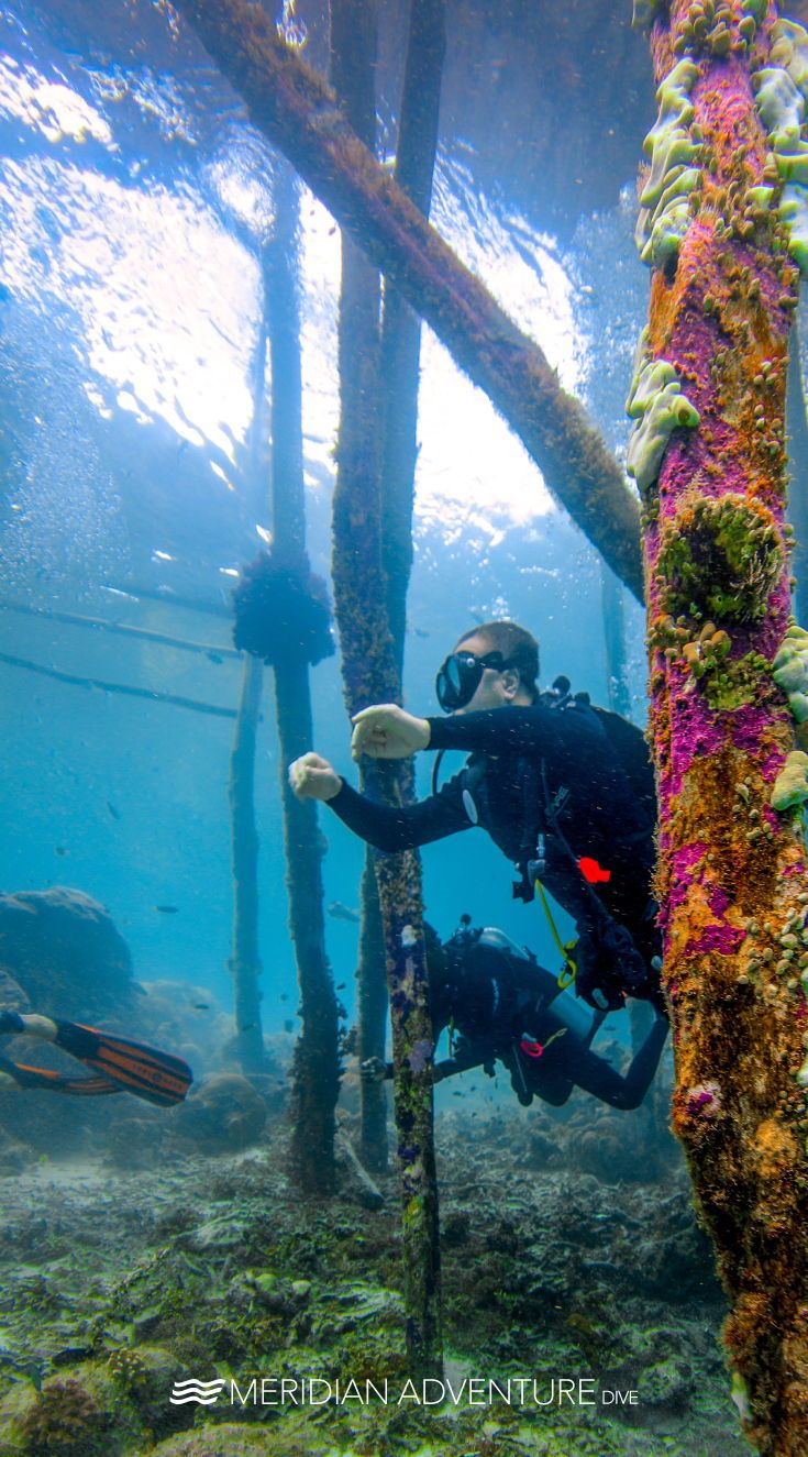 Take Only Pictures Kill Only Time Leave Only Bubbles Scubadiving Underwater Indonesia Scuba Diving Marina Resort Scuba Diving Courses