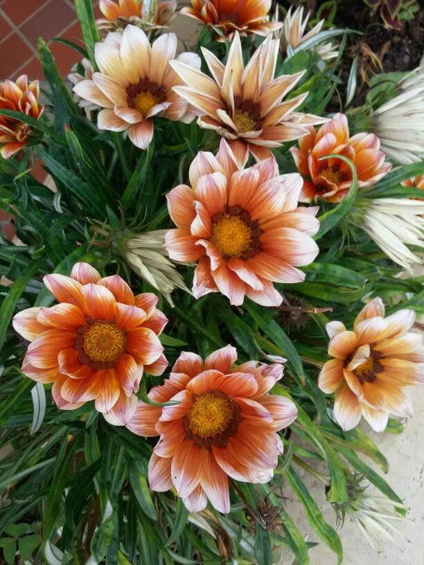 Flores en el municipio  de entre ríos antioquia.