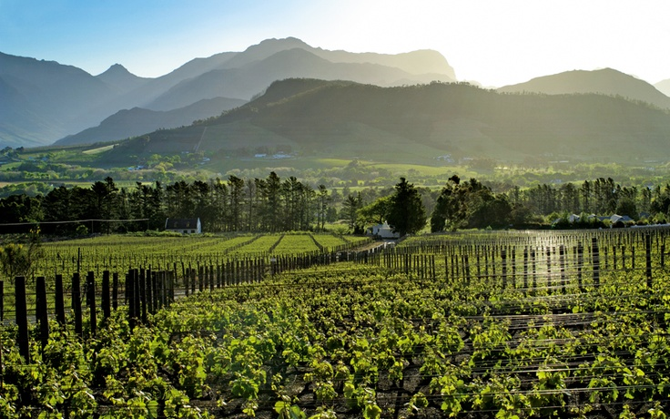 Leopard's Leap Family Vineyards | Franschhoek, South Africa
