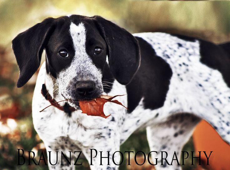 Autumn Pup by AaleyAbstruse.deviantart.com on @deviantART