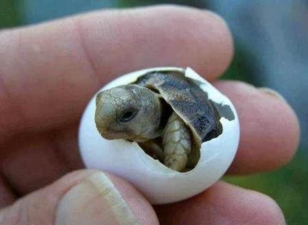 Ja wij worden ook geboren uit een ei!