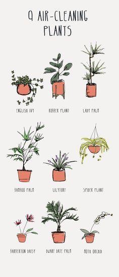 39 besten urban jungle bilder auf pinterest zimmerpflanzen blumen pflanzen und bl tter. Black Bedroom Furniture Sets. Home Design Ideas