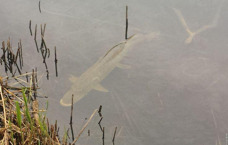 L'occasione non poteva sfuggirci! Avendo ricevuto l'invito da Andrea, per andare a pescare i bass nel suo lago privato, e sentiti i miei compagni di pesca, organizzare un'uscita è stato un attimo. E così,...