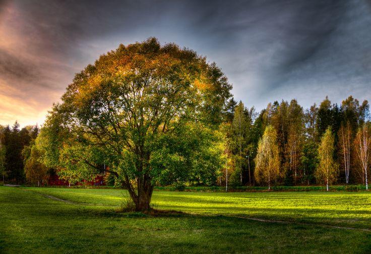 Autumn II by Rosen Velinov on 500px