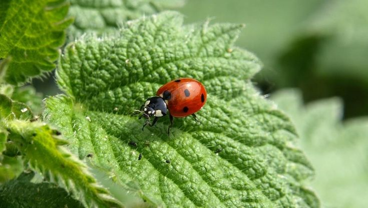 C'est une étude d'une rare ampleur publiée dans le journal scientifique Plos One qui le relève: près de 80% des insectes ailés ont disparu en Europe en 30ans. Si les causes de ce déclin...