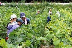ワイン用ブドウ苗木の全国有数の産地である山形県の苗木業者に全国から注文が殺到しているます なぜかというと日本ワインの人気が高まっており需要に供給が追い付かず県内のブドウ生産者ですら苗木確保に苦労しているんです 生産者は大変でしょうが山形が注目を浴びるのは嬉しい限り tags[山形県]