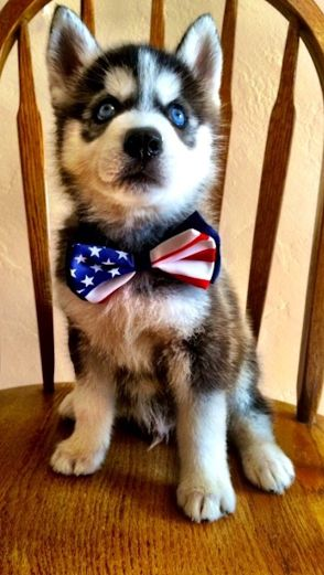 Reagan the frat pup is ready for more USA World Cup victories. #TFM