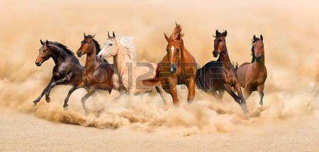 horses: Plazo manada de caballos en el desierto de arena tormenta