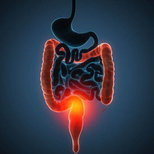 Je dikke darm is verantwoordelijk voor veel verschillende functies binnen het lichaam. Zorg daarom goed voor je dikke darm met deze 4 detoxsappen.