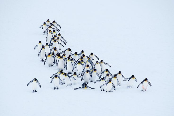 South Georgia Island Penguins Image | National Geographic Your Shot Photo of the Day