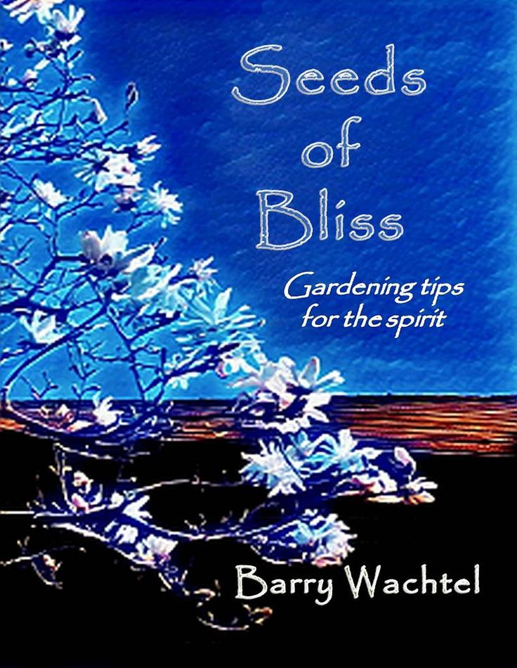 Seeds of Bliss: Gardening tips for the spirit Paperback – September 23, 2017 by Barry Wachtel (Author)