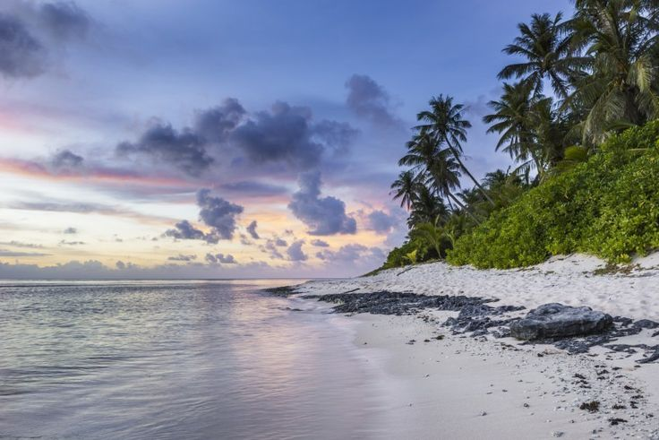exotic beach palm trees sunset Download free addictive high quality photos,beautiful images and amazing digital art graphics about Nature / Landscapes.