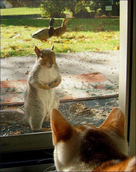 Can I borrow a cup of nuts? @Andrea Cramer