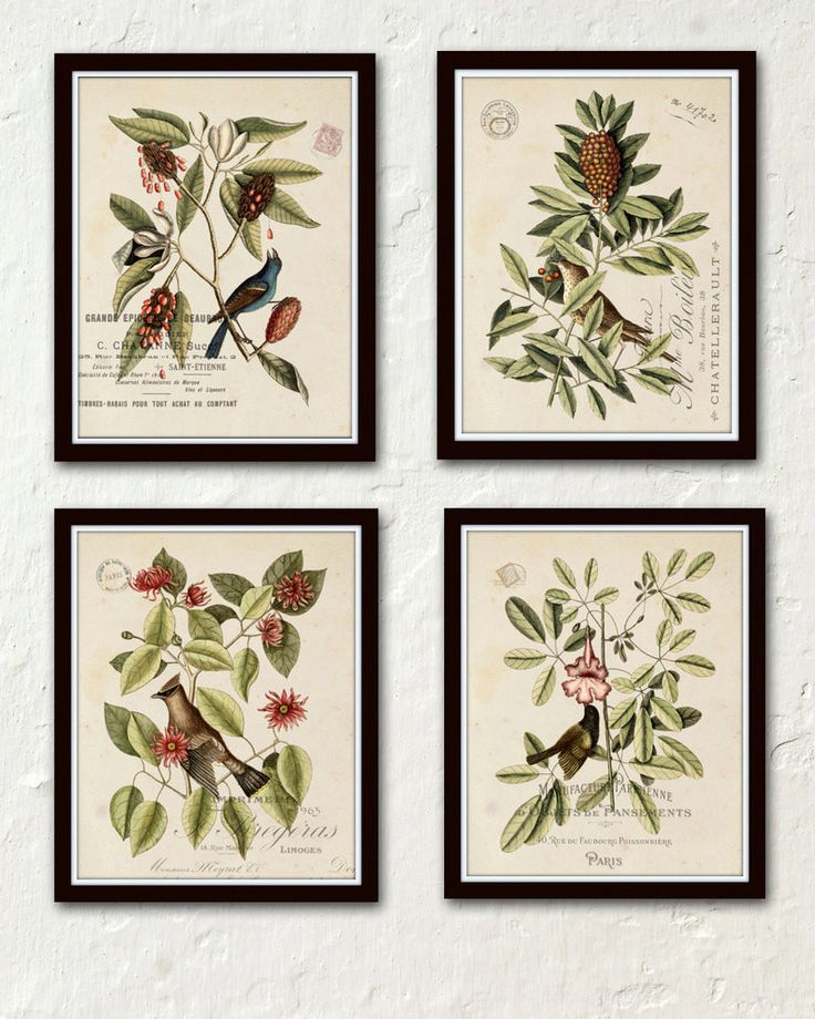 Best 27 Print Sets images on Pinterest | Botanical prints, Botanical ...