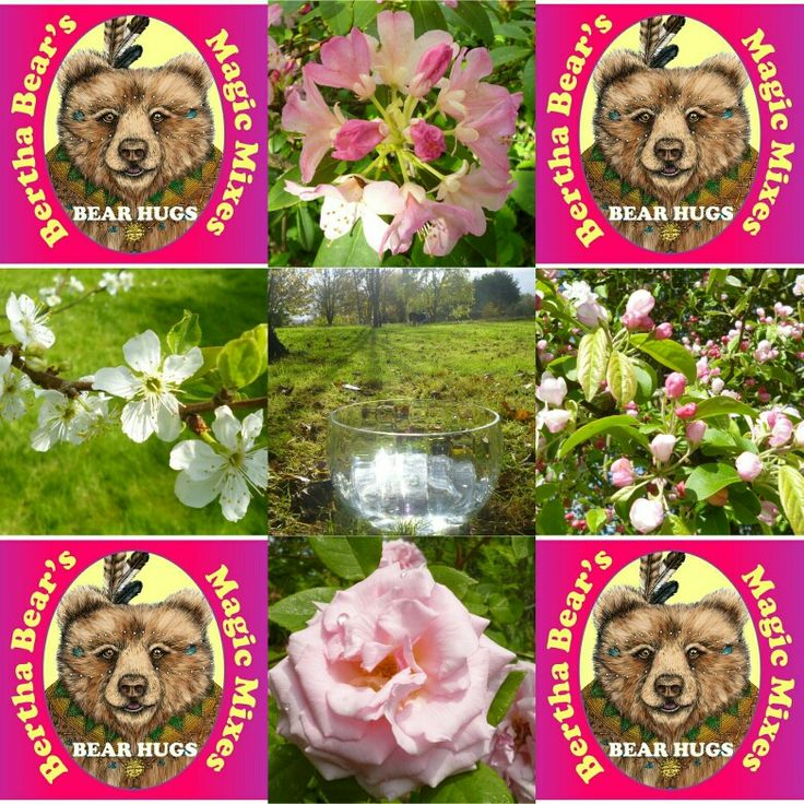 Bear Hugs, a popular flower essence blend from my Bertha Bear's Magic Mixes range. For when you need some kindness and support, for when you feel alone, a bit anxious and for when you just want to feel some big love.
