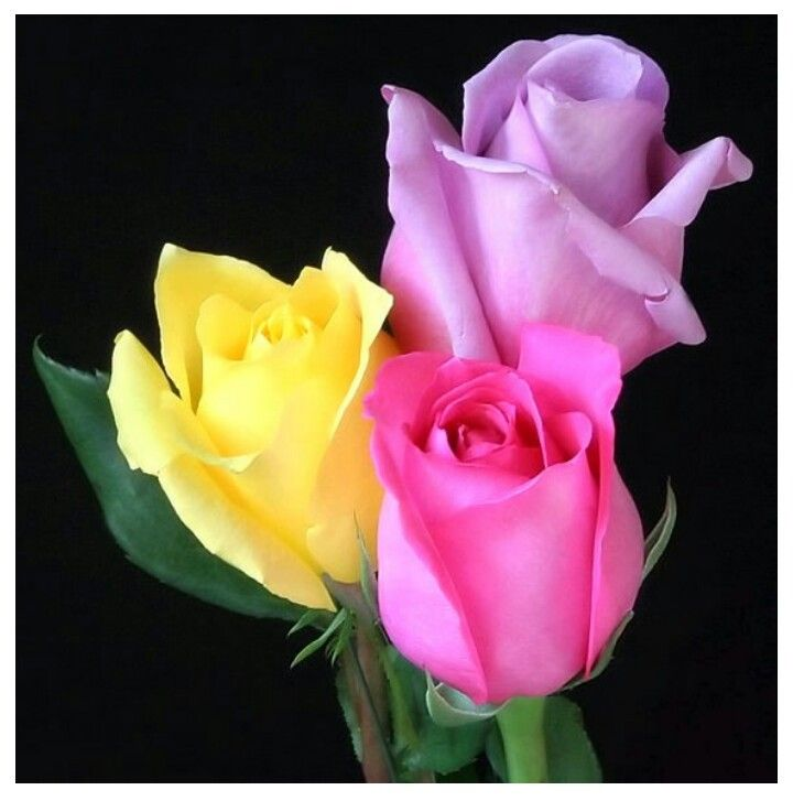 319 best Black and White Color images on Pinterest | Floral ...