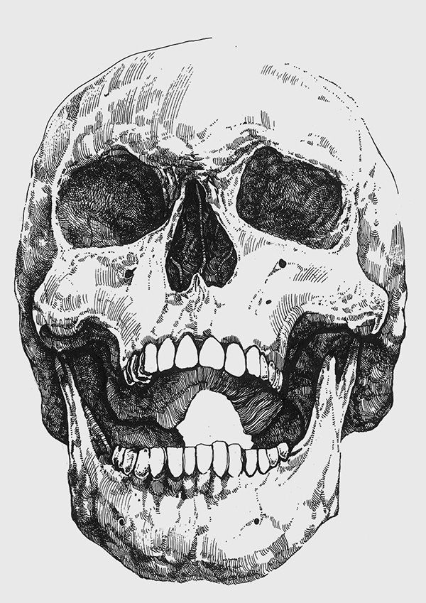 Skeleton Face Line Drawing : Human jaw bone drawing pixshark images