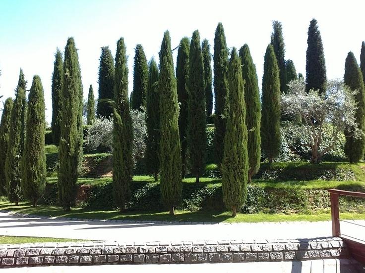 Bosque del recuerdo en honor de los muertos en el atentado de Atocha