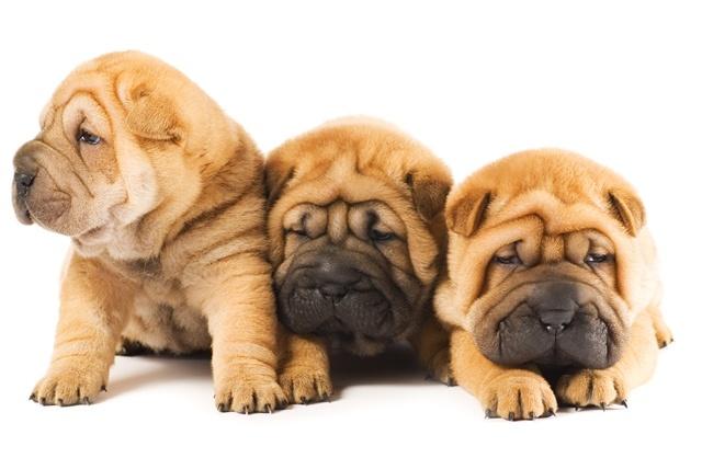 Three little friends