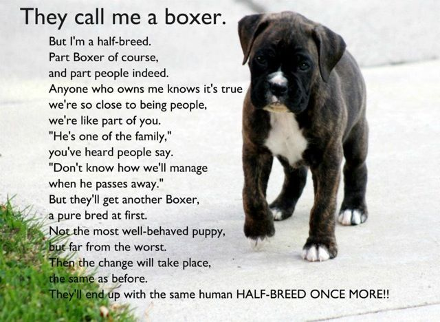 boxer lovePuppies, Boxers Baby, Boxers Dogs, Boxers Love, Half Breeds, So True, Boxers Poems, Fur Baby, Animal