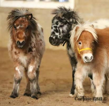 Mini horsies! Too stinkin cute. I love the black and white spotted one in the middle the most.