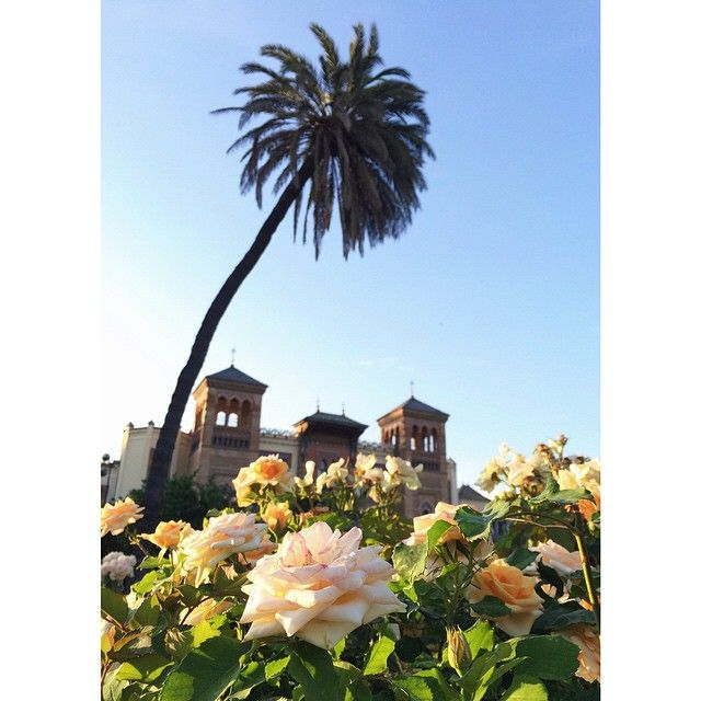 Beauty in the city | Flowers, Seville