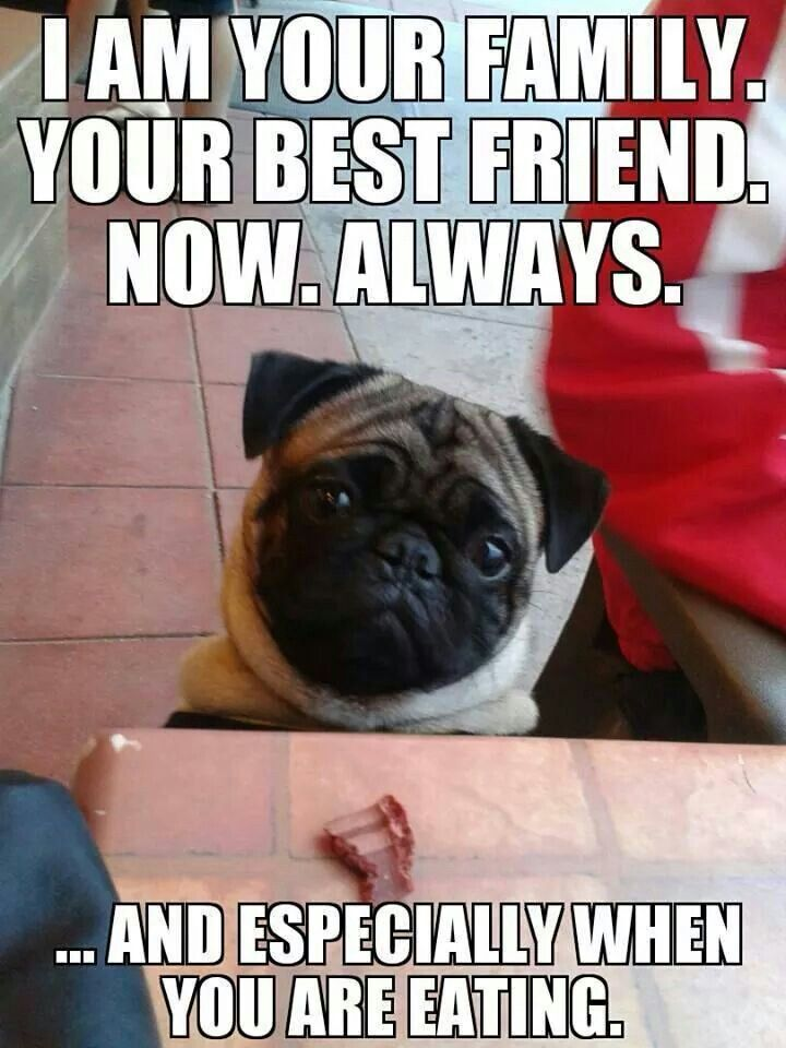 The last few bites always go to my pug. I even bring home left overs from restaurants for her. Pug love..