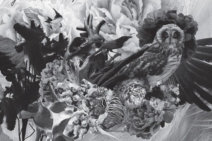 Премьера двух треков с нового альбома Муджуса «Metamorphosis» — Звуки — Афиша-Волна