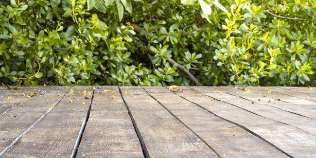 Comment Eliminer La Mousse Sur Une Terrasse En 2020 Terrasse Terrasse Pave Mousse