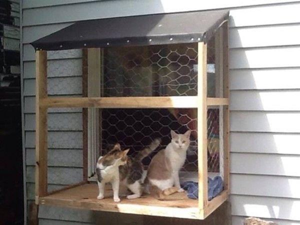 3 Safe Window Ideas For Cats Window Box Cat Solarium Window Sill Perch Unique Balcony Garden Decoration And Easy Diy Ideas Window Box Cat Window Cat Friendly Plants