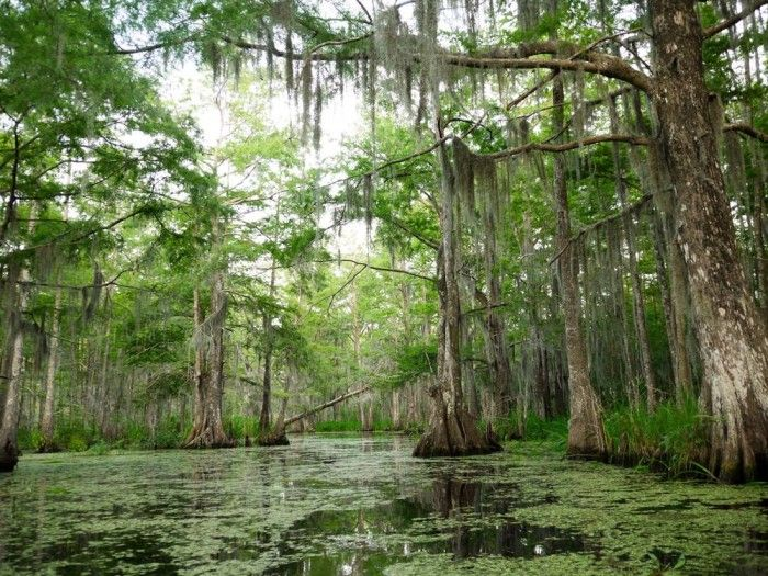 Things to do in New Orleans Area. 11) Take a Hike in Jean Lafitte National Park