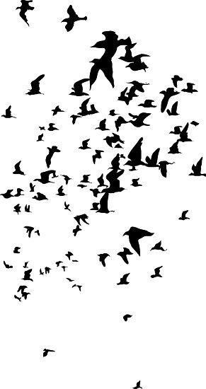 Vogelschwarm v2, Wandtattoo – Wandtattoo | Wandtattoos für …