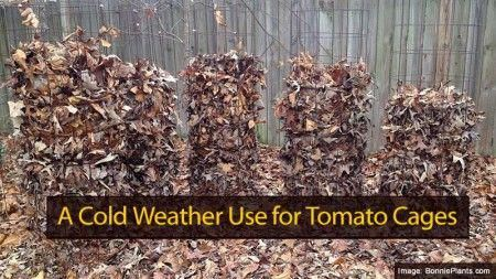 Winter Tomatoe Cages 121613 Leaf Compost Tomato Cages 640 x 480