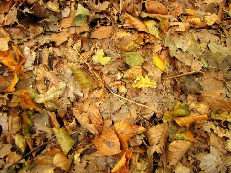 Skovbund, efterår, skov | Stock Billede | Colourbox