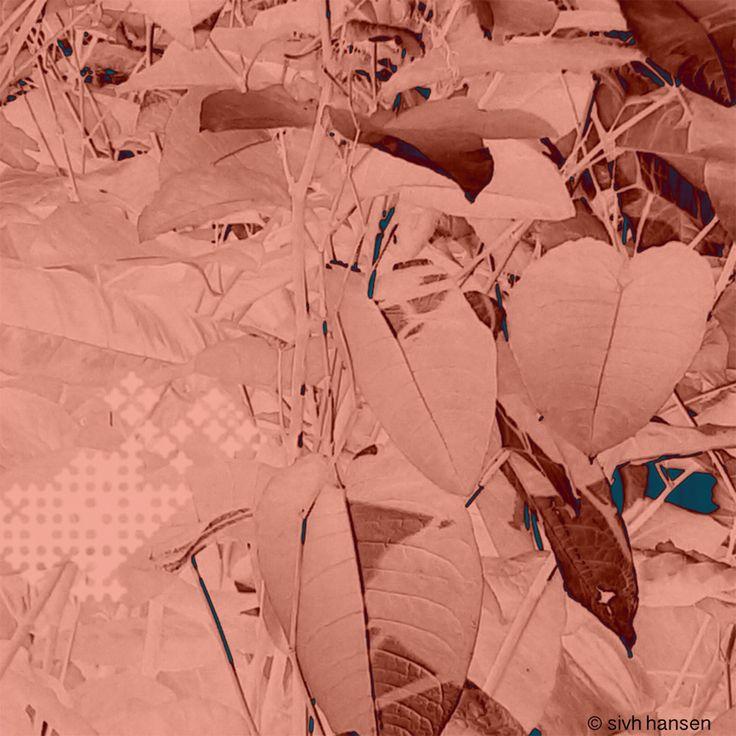 "© Sivh Hansen: ""Pink.Foliage II"" (2016), digital print"
