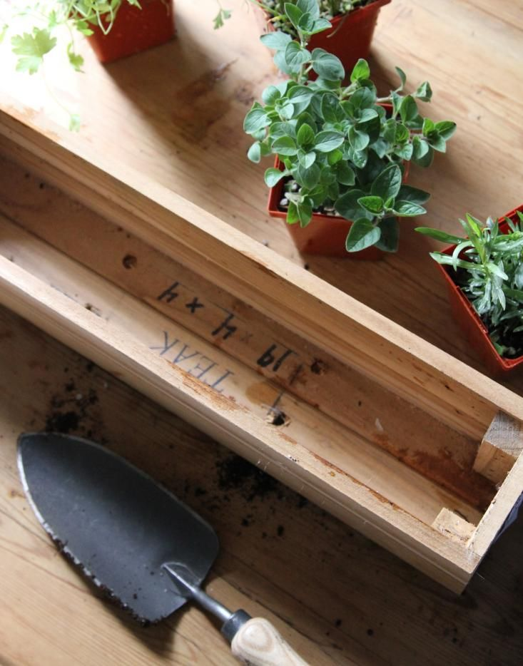 an herbal window box for a low-light apartment, gardenista