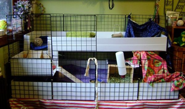 41 best guinea pig home idea 39 s decor images on pinterest for Pig decorations for home