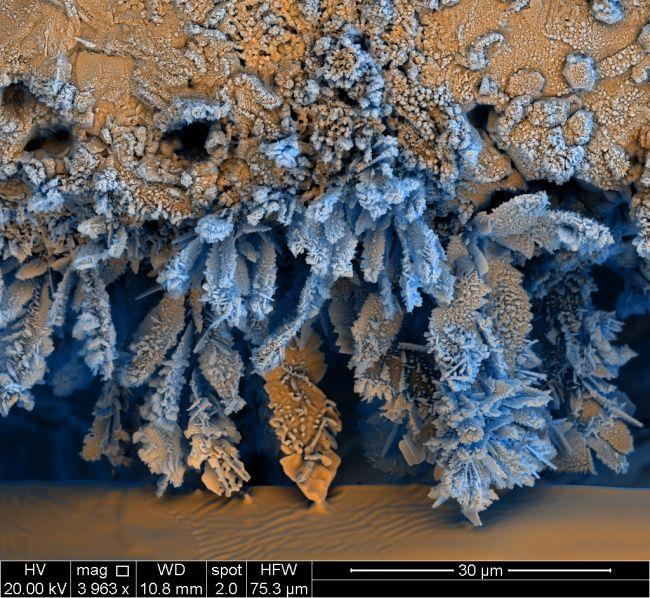 25снимков под микроскопом, доказывающих, что каждая вещь— это вселенная