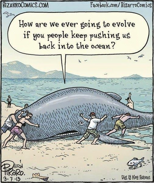 Science Humor | Evolution | From Google+