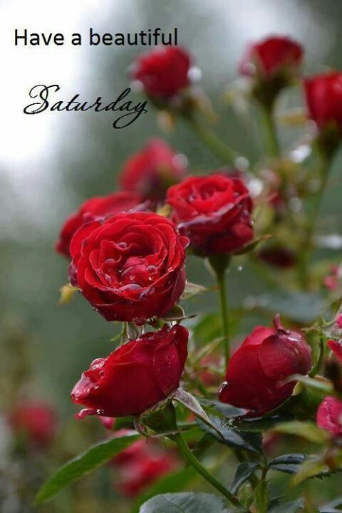 Good Morning Beautiful Red Flowers : Saturday blessing quotes and inspirational pinterest beautiful happy sabbath spring