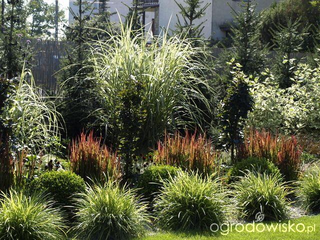 Tu ma być ogród :) - strona 1135 - Forum ogrodnicze - Ogrodowisko