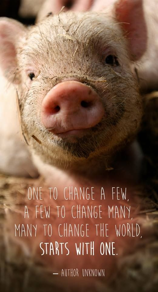 One vegan, a few vegans, a world of people who are compassionate starts with one