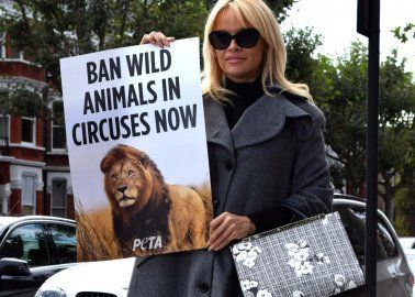 Pamela Anderson: 'Kissing Circus Animal Acts Goodbye Is Easy as Pie'