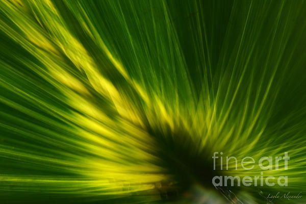 This is a semi-abstract of a palm leaf with glowing sunlight as though from within. A series of three. #shop #print #art #artprint #photography #gift #palm #leaf #abstract #semiabstract