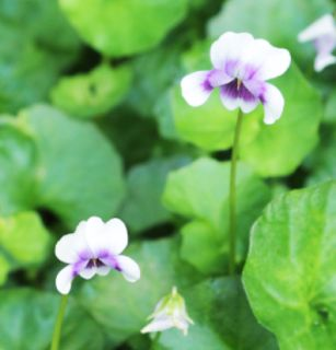 White Waratah Creations: April in the Australian Garden