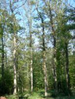 Las cenizas de Robert Musil (#1880-#1942), #novelista -Die Verwirrungen des Zöglings Törleß (#1906)-, #dramaturgo y #ensayista austriaco, se esparcieron en un bosque de #Ginebra cerca de su casa. #escritoressintumba #RobertMusil